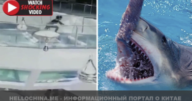 Женщина упала к акулам