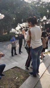 В Китай пришла весна фото 2