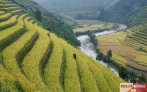 Рис в Китае фото 15