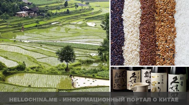 Рис в Китае
