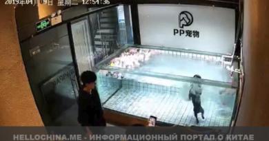 Китай, собака, животные в Китае