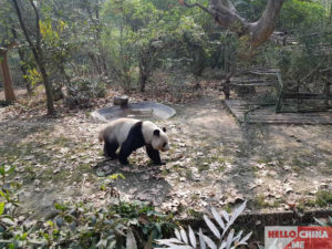 Чэнду, Китай