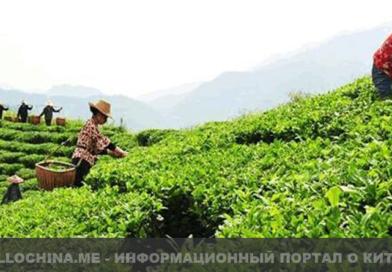 Философия китайского чая (Учение о жизни)