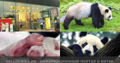 Панда парк в Чэнду | Как живёт большая черно-белая панда | Факты о пандах | Панды в Китае